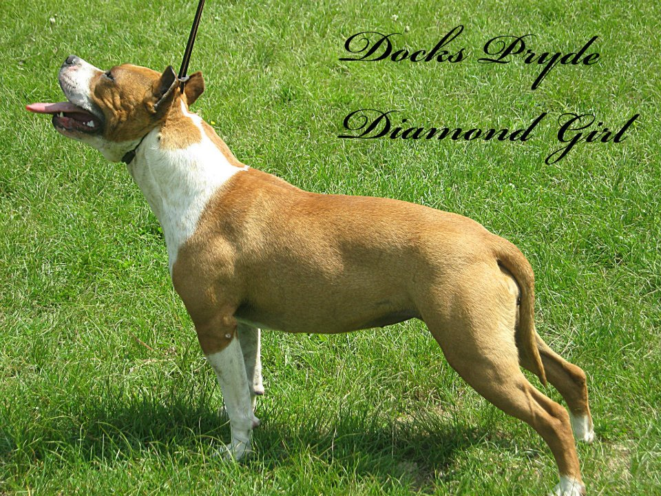 Dok's Pride Diamond Girl